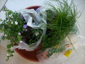 Easter garden 01